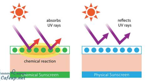 Decode chemical sunscreen - The difference between chemical sunscreens and physical sunscreens